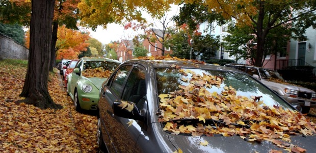 Protect Your Car From Fall Leaves