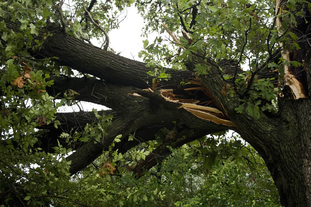 Protect Your Car During Windstorms